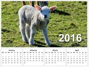 Picture of a 2016 calendar with a lamb on it